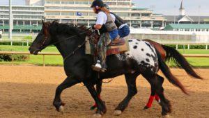 artykuły jeździeckie